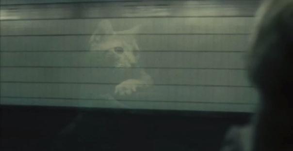 Cats LD